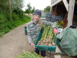 Mary harvesting garlic