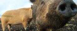 Farm Newsletter