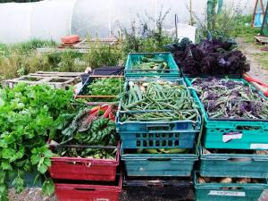 Vegetables on the way to the Coach House for Members