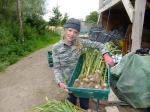 Mary harvesting garlic